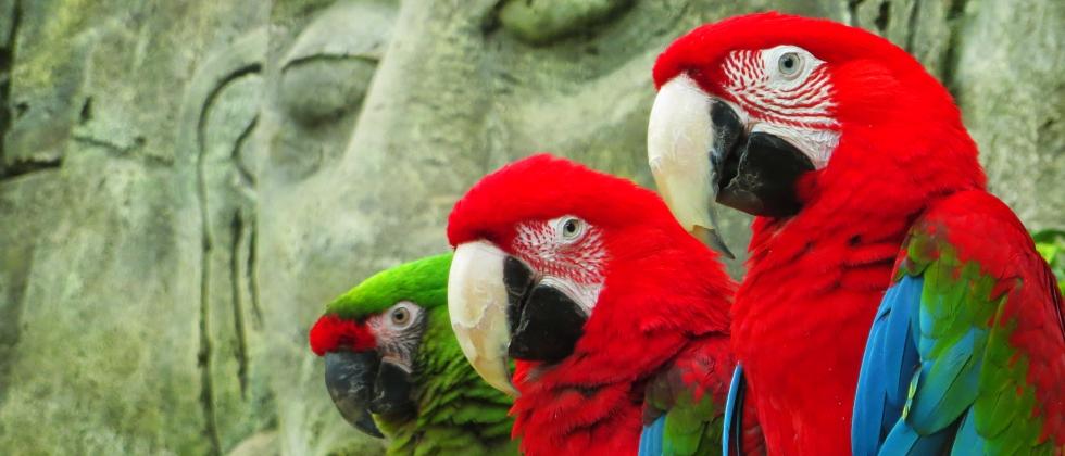Посещение зоопарка за 9 руб. для двоих