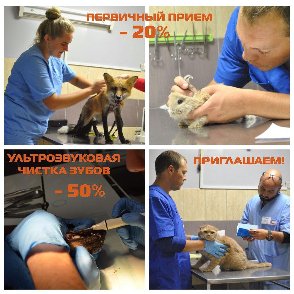 Бесплатное обрезание когтей (0 руб), ультразвуковая чистка зубов, первичный прием животных от 14,40 руб.