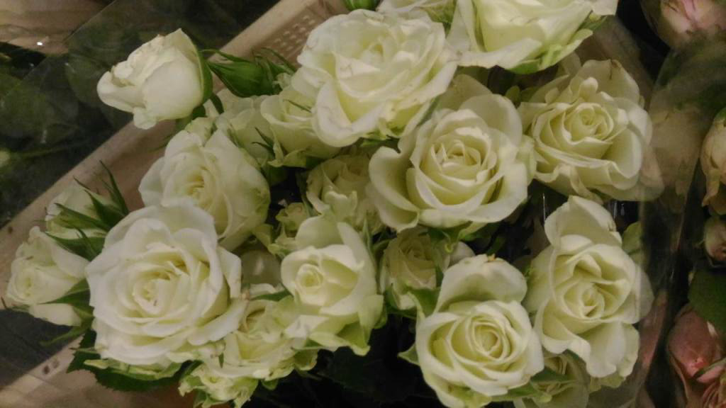 """Розы Эквадор и кустовые в магазине цветов """"cvetochnik.by"""" от 2 руб/шт."""