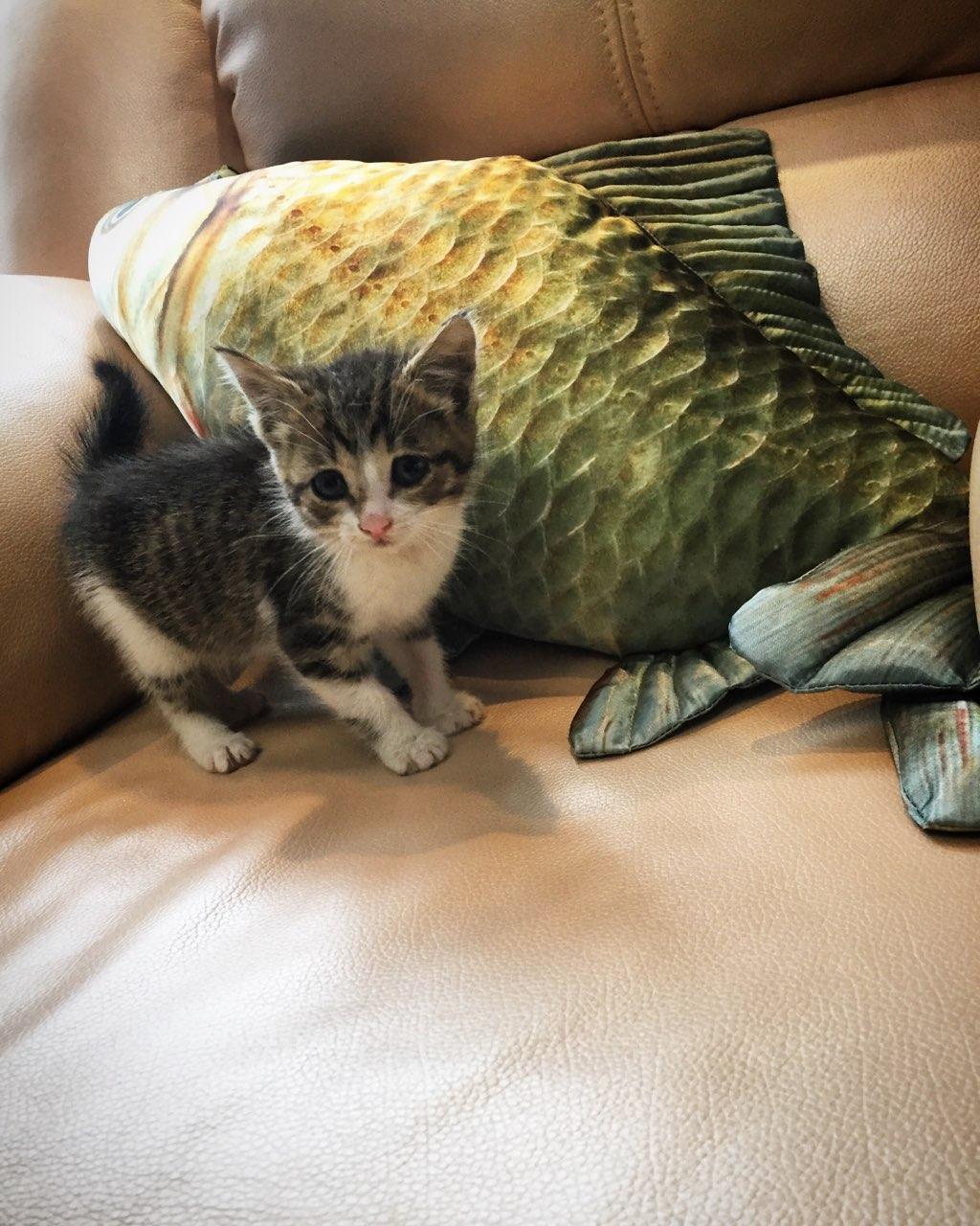 Котенок в хорошие руки!
