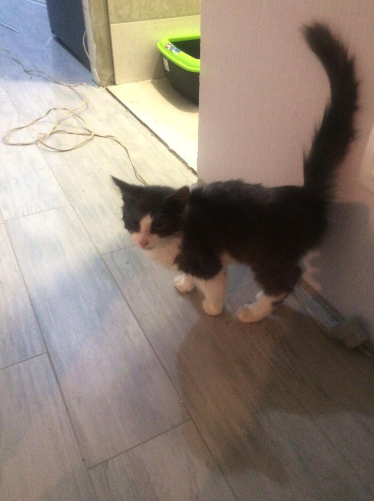 Очаровательный котенок в дар!
