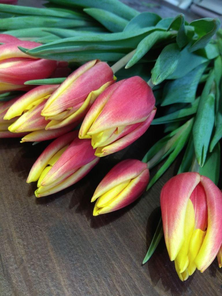 Тюльпаны от 1,90 руб/шт. + бонус + бесплатная упаковка!