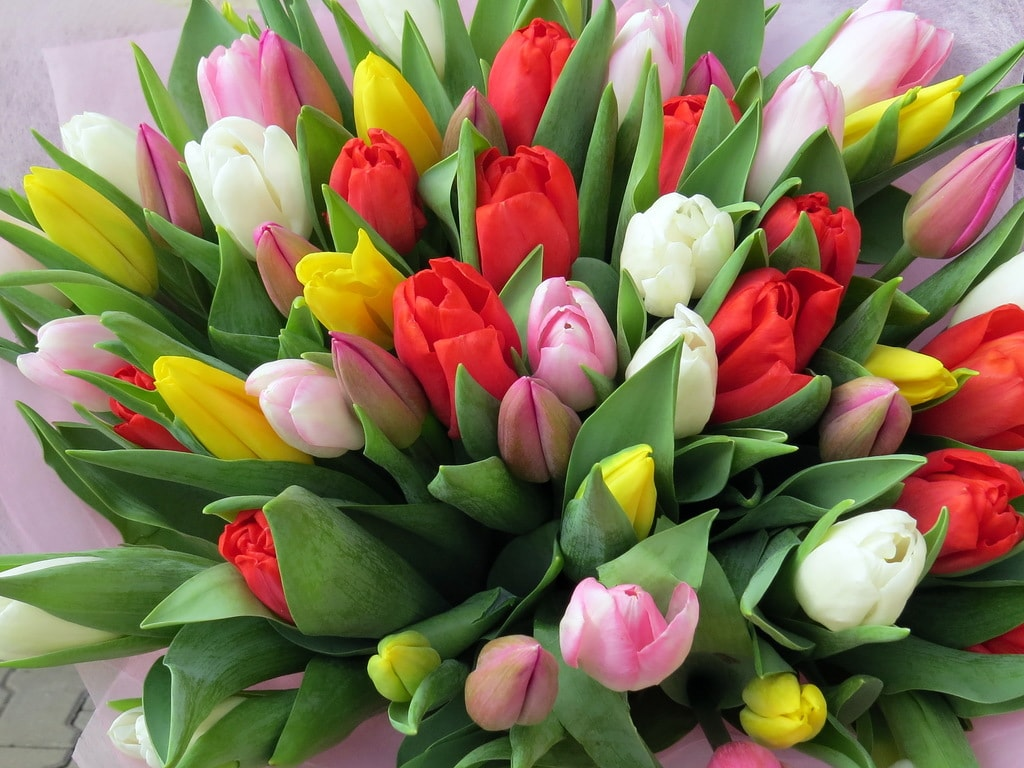 Свежие тюльпаны, альстромерии, орхидеи от 0,80 руб, оригинальные букеты от 50 руб