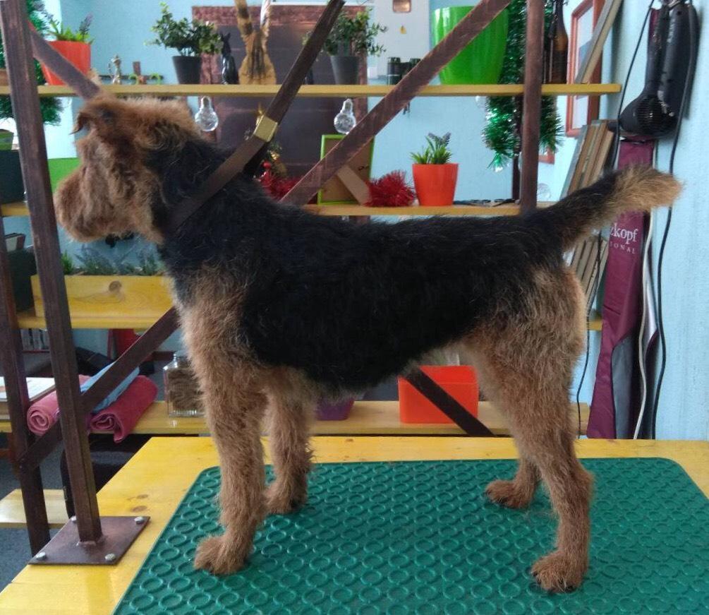 Полный комплекс по уходу за собаками, гигиеническая стрижка кошек и собак, тримминг для собак от 10 руб.