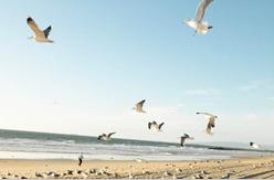 Выходные на Балтийском море всего от 120 руб/3 дня