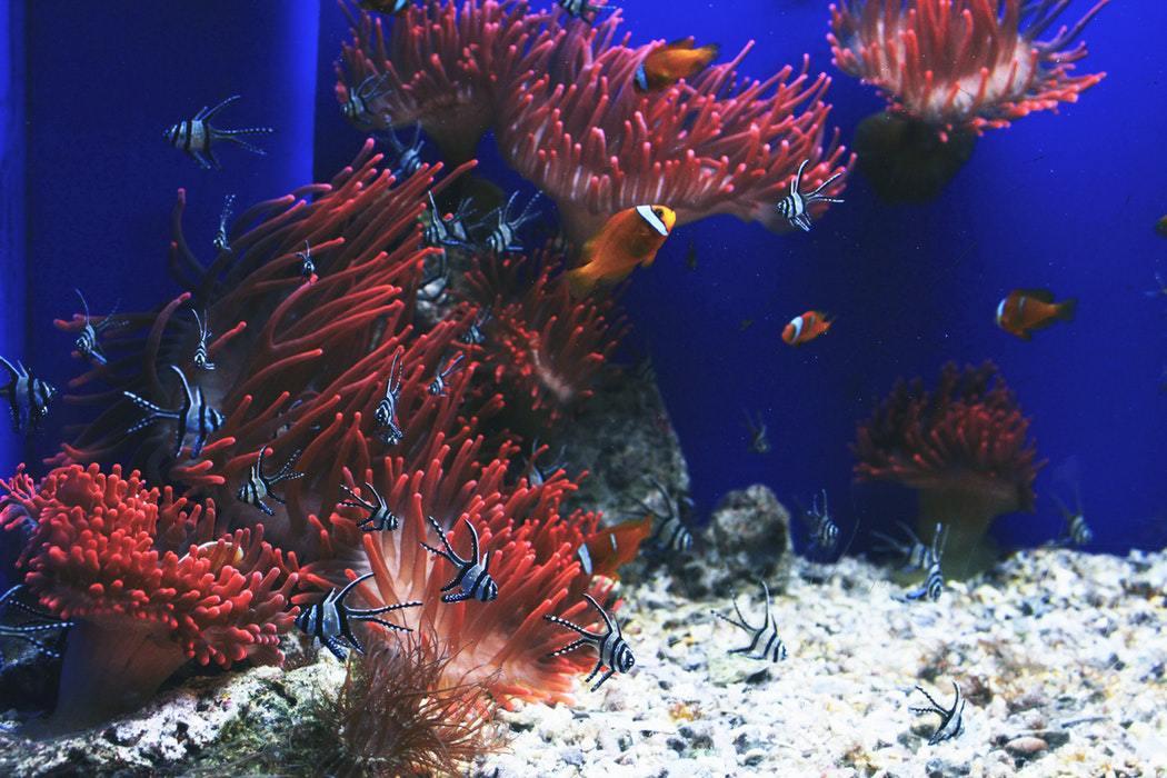 """Выставка аквариумных рыбок в ТРЦ """"Galleria"""" всего от 2,25 руб."""