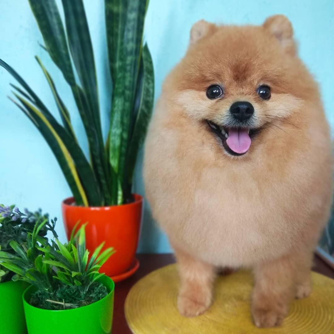 """Комплексный уход для собак и котов, тримминг, гигиеническая стрижка от 12 руб. в студии груминга """"Pets"""""""