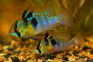 """Скидка 30% на всех аквариумных рыбок в магазине """"Рetmarket"""""""
