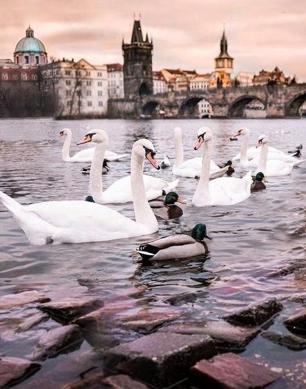 "Тур ""Вена - Прага"" от 195,50 руб/4 дня с турагентством ""Визавитур"""