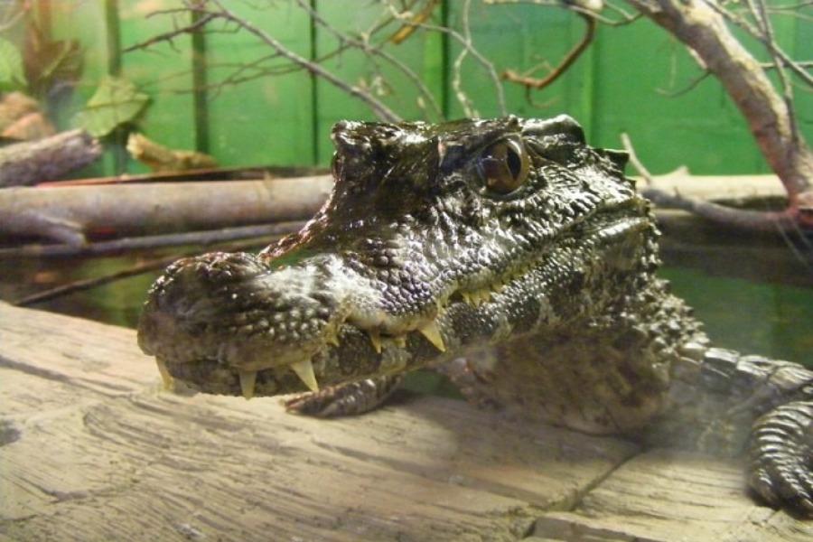"""Выставка экзотических животных """"Тропики"""" билет для двоих за 3,50 руб."""