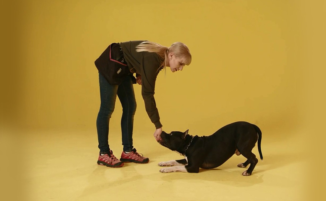 Online видеокурс по дрессировке собак со скидкой 50%
