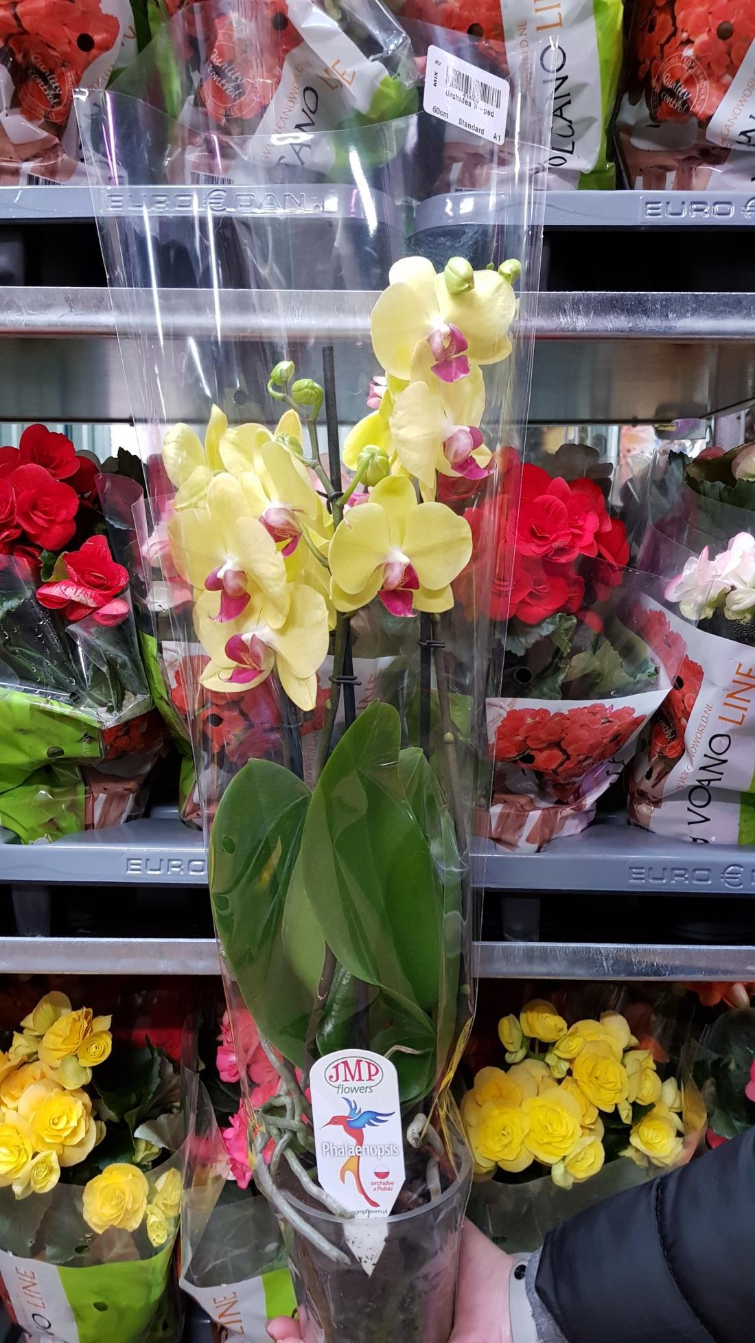 Орхидея Микс со скидкой всего от 19 руб.