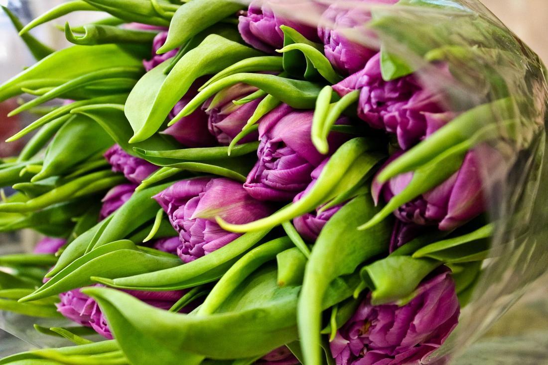 Свежие тюльпаны от 0,80 руб, розы, гвоздики, хризантемы, альстромерии от 0,60 руб.