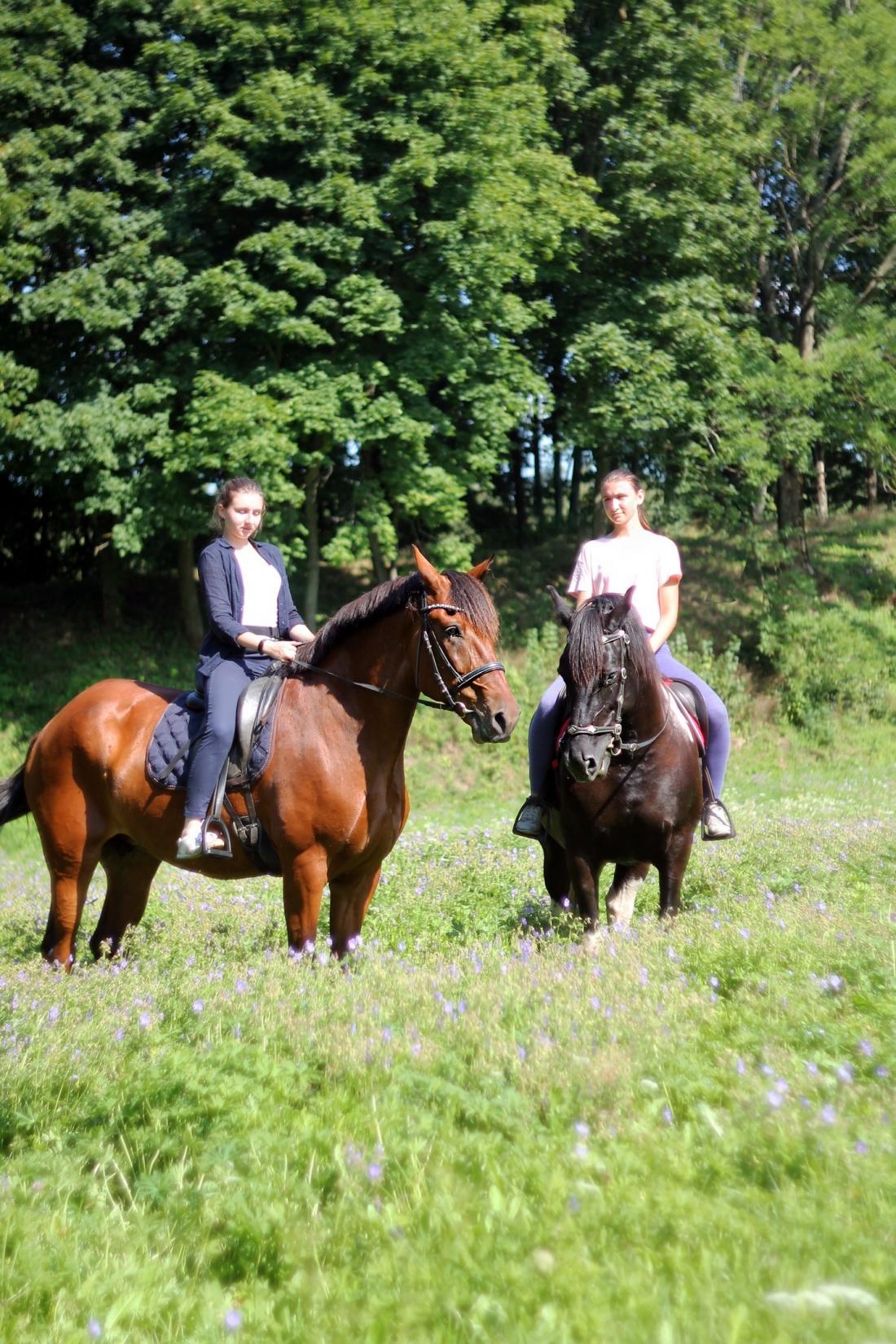 Конные прогулки вдоль реки Менки всего от 10 руб/чел.