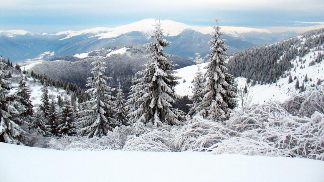 Новый год в Карпатах от 515 руб/8 дней от Элладатур