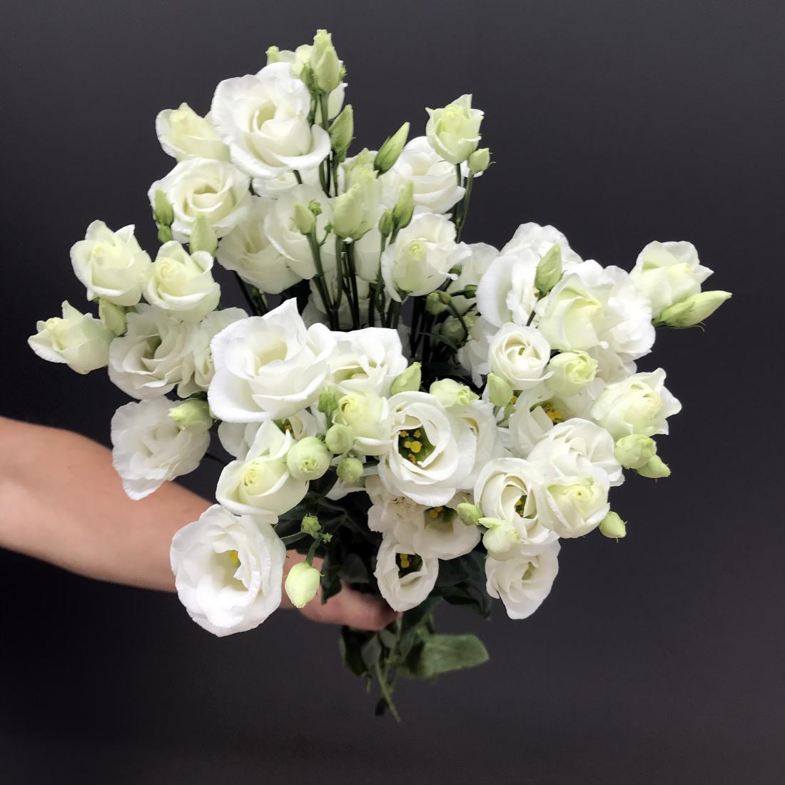 Лизиантус фото свадебный
