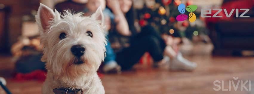 Что подарить на Новый год? Подарите безопасность и положительные эмоции!