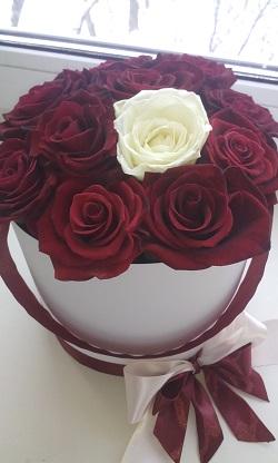 розы26