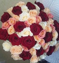 розы41