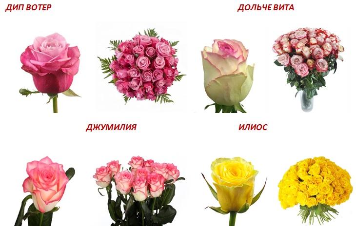 розы4